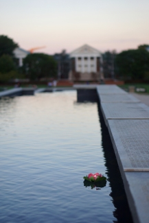 A lone water lantern floating down the McKeldin fountain. (Heather Kim/Bloc Photographer)