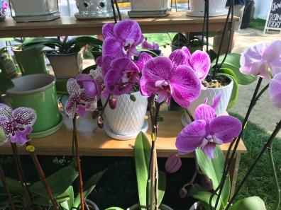 The Orchid Station's flowers. (Sara Karlovitch/ Bloc Reporter)