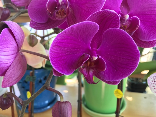 The Orchid Station's orchid. (Sara Karlovitch/Bloc Reporter)